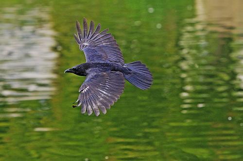 Oiseau sur le Lac